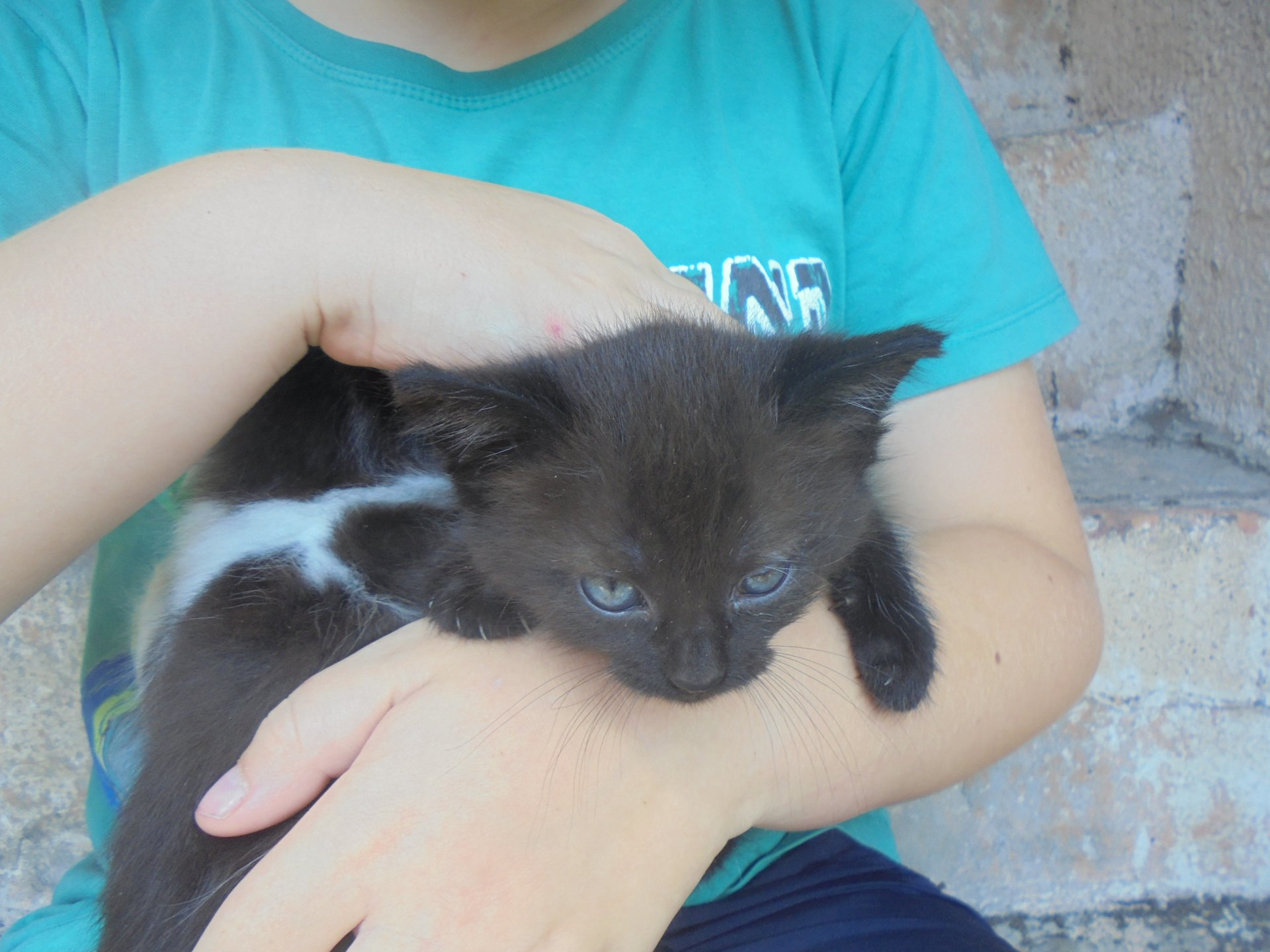 Černá kočička vůně